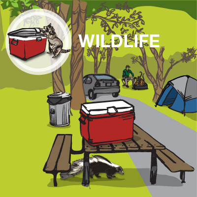 an illustration of a raccoon and a skunk at a campsite